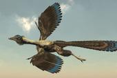 Tổ tiên của loài chim chính là khủng long, bạn có tin không?