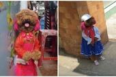 """Cộng đồng mạng phát cuồng với hình ảnh """"cô chó"""" đi học như người thật, lại sắp thành idol như Nguyễn Văn Dúi chăng?"""