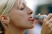 Top 5 điều khiến bạn nên sợ trước loài chuột, điều cuối sẽ làm bạn không dám nhắm mắt đi ngủ