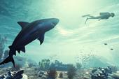 Xuất hiện tựa game giả lập cá mập đi tấn công mọi thứ, thậm chí cả cắn cáp quang