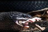 Top 5 sự thật mà chúng ta thường xuyên hiểu nhầm về rắn