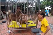 Nhốt em gái vào chuồng chó, con trai bà Tân Vlog lại gây nên những tranh cãi không hồi kết