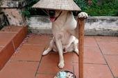 Chó đội nón mê – Giai thoại kinh dị về vận rủi khiến nhiều người sợ hãi