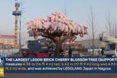 Kỷ niệm sinh nhật 1 tuổi, Legoland cho ra đời cây hoa anh đào bằng Lego lớn nhất thế giới