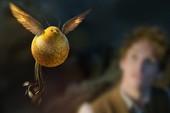 Tìm hiểu về chim Snidget - biểu tượng của trò Quidditch trong Harry Potter