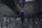 """Tìm hiểu về Billywig: Khi phù thủy """"phê pha"""" bằng... ong đốt"""