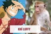 One Piece: Tên của các nhân vật và loài vật tương ứng với họ ở đời thật