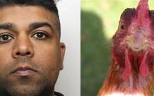 Lạm dụng tình dục đàn gà nuôi trong nhà, người đàn ông nhận án 3 năm tù