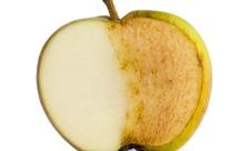 Vì sao quả táo vừa mới gọt mà lại bị xỉn màu ngay lập tức?