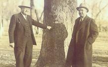 Chuyện về viên đạn 'kiên nhẫn' suốt 20 năm trong thân cây, cuối cùng cũng thực hiện được 'sứ mệnh' ám sát