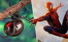 3 anh em tự cho con nhện độc nhất thế giới cắn nhằm