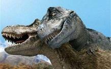 Nghiên cứu mới cho thấy khủng long bạo chúa Tyrannosaurus dựa vào giác quan thứ sáu để