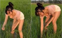 Hớ hênh vòng một gợi cảm khi đi thu hoạch lúa, bà Tưng bất ngờ gặp vô số chỉ trích
