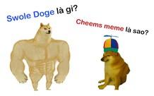 Swole Doge vs. Cheems là gì và vì sao meme về những chú chó này lại nổi tiếng?