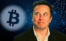 Người dùng Twitter phát hiện ra Elon Musk mua vào 10 nghìn Bitcoin ngay lúc ra tweet