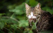Hơn 1000 con mèo hoang