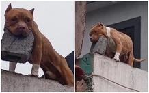 Ghét bị làm phiền, người đàn ông huấn luyện cún cưng ném gạch vào người gõ cửa khiến CĐM sửng sốt