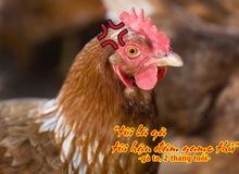 """Ký sự gamer: Chuyện """"con gà"""" trong thế giới ảo"""
