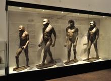 Con người từng có khả năng tái sinh cơ thể, nhưng đã bị 'tắt đi' trong quá trình tiến hóa