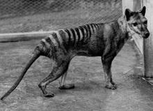"""Những ví dụ cho thấy tiến hóa đôi khi cũng """"hà tiện"""", tận dụng cùng một đặc điểm cho hai loài khác nhau"""