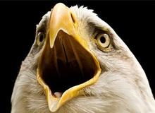 Vì sao các loài chim lại không có răng: Câu trả lời thú vị đến bất ngờ!