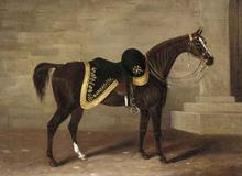 Những chiến mã nổi tiếng thế giới: Có cả loài ngựa giúp Napoleon đánh bại cả châu Âu