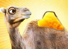 Có gì bên trong bướu của lạc đà, tại sao chúng có thể nhịn khát lâu đến thế?