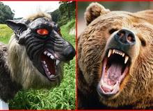 """Mấy bác nông dân sử dụng """"vũ khí"""" cực ghê rợn để chống gấu dữ, người thường nhìn cũng hãi"""