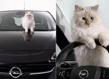 Được thừa kế 4635,5 tỷ đồng từ chủ, con mèo tỷ phú tận hưởng cuộc sống sang chảnh nhất thế giới