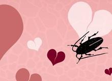 Dịch vụ đặc biệt cho những trái tim tan vỡ vào Valentine: Đặt tên người yêu cũ cho gián rồi để nó làm bữa tối của các con vật khác