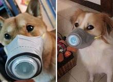 Lo sợ virus corona, người dân Trung Quốc đeo khẩu trang cho cả thú nuôi