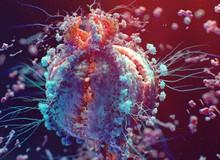 """Tìm hiểu về Virus – Những thực thể """"sống lỗi"""" nhất trên Trái Đất"""
