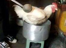 Loạt ảnh thảm họa nấu nướng không ra hồn của những kẻ mới tự cách ly