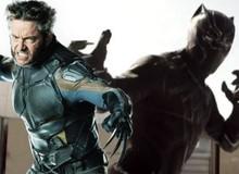 Phản biện: Wolverine sọ sức với Black Panther, 5 lý do Người Sói sẽ giành chiến thắng trong trận đấu tay đôi