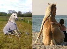 Ngựa phi ai chẳng thấy rồi, ngựa ngồi trông như thế nào mới ít người biết