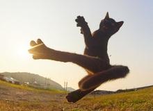 Chết cười với những chú mèo tập võ luyện chưởng như phim kiếm hiệp