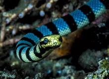 """Top 6 loài rắn bạn cần phải tránh nếu không muốn """"thăng thiên"""" (P. 2)"""
