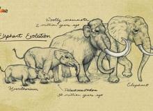 Vì sự ảnh hưởng của con người, một số động vật thậm chí đã bắt đầu đảo ngược quá trình tiến hóa