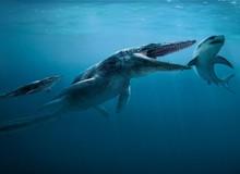 Tylosaurus: Siêu sát thủ đại dương thời tiền sử, cá mập cũng chỉ là thực đơn
