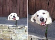 """18 chú chó rơi vào rắc rối chất chồng nhưng bên ngoài vẫn phải """"cố tỏ ra là mình ổn"""" mà cười toe toét"""