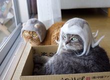 Chải ra cả tấn lông thừa, cặp vợ chồng hô biến chúng thành những chiếc mũ siêu đáng yêu cho mèo nhà mình