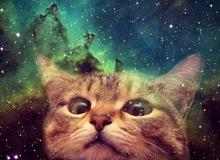 Bạn có biết nhờ loài mèo chúng ta mới có internet?