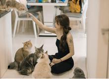 Kiều Anh Hera cùng dàn streamer tới quán của Linh Ngọc Đàm họp hội yêu mèo