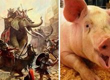 """Người La Mã từng dùng """"lợn lửa"""" để chiến đấu?"""