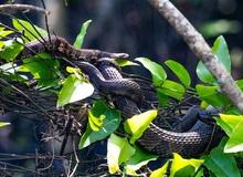 """Giải mã bí ẩn: Chuyện """"hoan lạc"""" của loài rắn thú vị thế nào? (P.1)"""