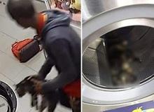 Phát hiện xác 3 con mèo trong máy giặt công cộng, camera soi ra hành động vô nhân đạo của gã đàn ông và cái giá phải trả thích đáng
