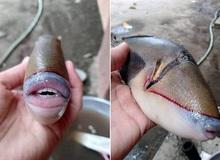 Cư dân mạng thích thú với con cá 'sở hữu bờ môi căng mọng' y như con người