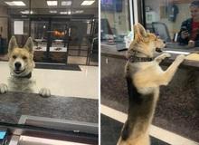 """Mải chơi đi lạc, chú chó tự tìm đến đồn công an để báo cáo """"cháu đang bị mất tích ạ"""""""
