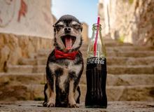 Những tác dụng kỳ quặc nhưng hiệu quả khó tin của Coca: Dưỡng tóc còn tốt hơn là uống!