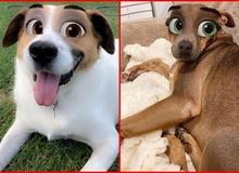 """Dàn cún cưng """"biến thân"""" thành nhân vật Disney cực đáng yêu nhờ hiệu ứng từ Snapchat"""